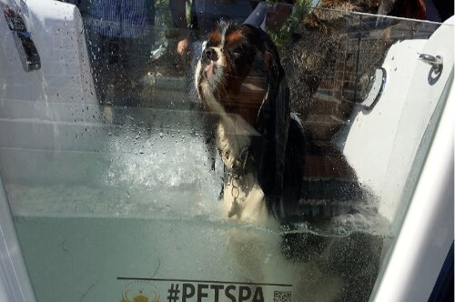 Pet Spa Marano Beach Spiaggia Pet Friendly