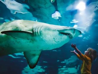 Aquarium de Cattolica